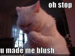 3729979053_blushing_cat_33380970718_xlarge
