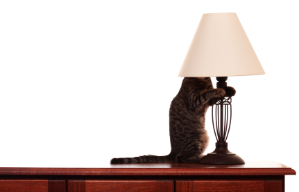 cat_lampshade