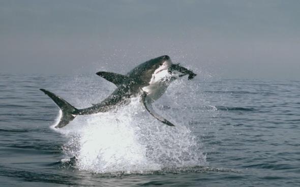 shark-jump-5