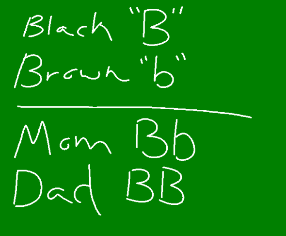 MS Paint and a touch-screen computer screen = Lyle actually using the chalkboard.